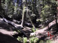 Congress Trail, Giant Forest, Sequoia, June without snow